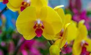 Желтые орхидеи: фото, описание разных видов и сортов, тонкости ухода
