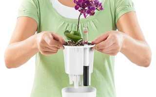 Горшки для орхидей с автополивом: устройство, плюсы и минусы, популярные варианты