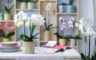 Где должна стоять орхидея в квартире: выбираем лучшее место