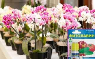 Как применять Фитолавин для орхидей: дозировка, инструкция, варианты использования
