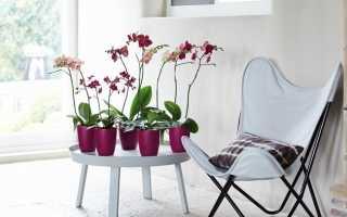 Какой должен быть горшок для орхидеи: правила выбора и фото подборка идей