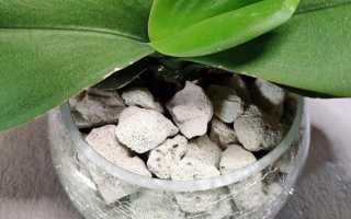 Пеностекло для орхидей: что это, плюсы и минусы, как использовать, отзывы и советы
