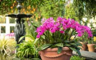 Как несколько орхидей посадить в один горшок + фото идеи для вдохновения