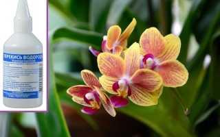 Перекись водорода для орхидей: польза или вред, тактика применения