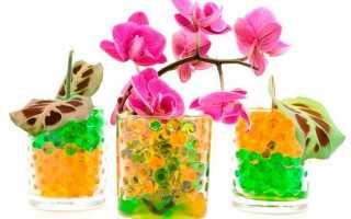 Oрхидея в гидрогелевых шариках: нюансы выбора, посадки и выращивания