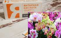 Как подкормить орхидею янтарной кислотой — тонкости применения янтарина