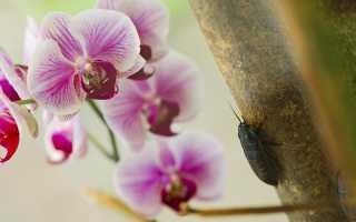 Вредители на орхидеях: фото, описание, борьба и профилактика