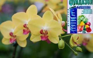 Фундазол для орхидей: как применять, пошаговый инструктаж, плюсы и минусы, отзывы