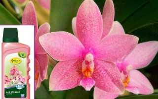 Удобрение для орхидей Фаско: способ применения тоника Цветочное счастье и жидкого состава