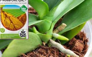 Рибав-Экстра для орхидей: применение для наращивания корней, адаптации и снижения стресса