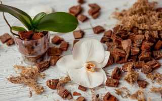 Выбираем лучший грунт для орхидей фаленопсис: состав, обзор вариантов + советы