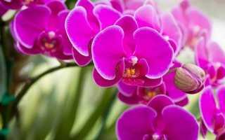 Cколько лет живет орхидея дома: фаленопсис и другие, как узнать возраст и продлить срок жизни