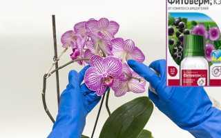 Фитоверм для орхидей: как применять, разводить, обрабатывать при атаке вредителями