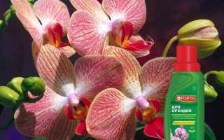 Cпособ применения удобрения Бона Форте для орхидей