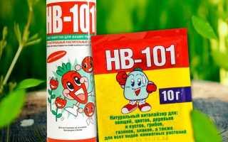 HB-101 для орхидей: полный гайд по применению органического биостимулятора