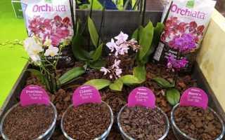 Чем примечательна Орхиата для орхидей, какую фракцию использовать для посадки