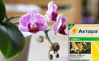 Применение Актары для орхидей: подробный инструктаж цветоводу