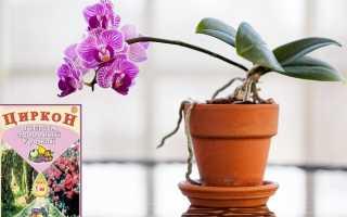 Как применять циркон для орхидей: все об использовании биостимулятора