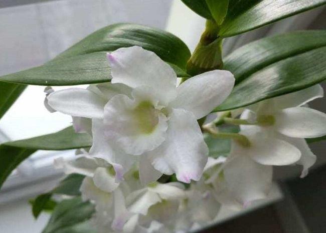 Купленный цветок