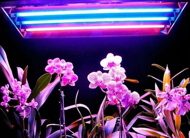 Фитолампа для орхидей