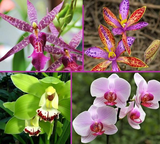 Разнообразие орхидей