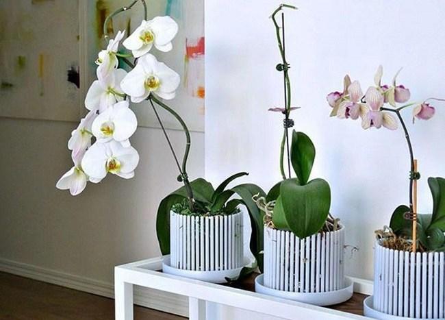 Горшок корона для орхидеи
