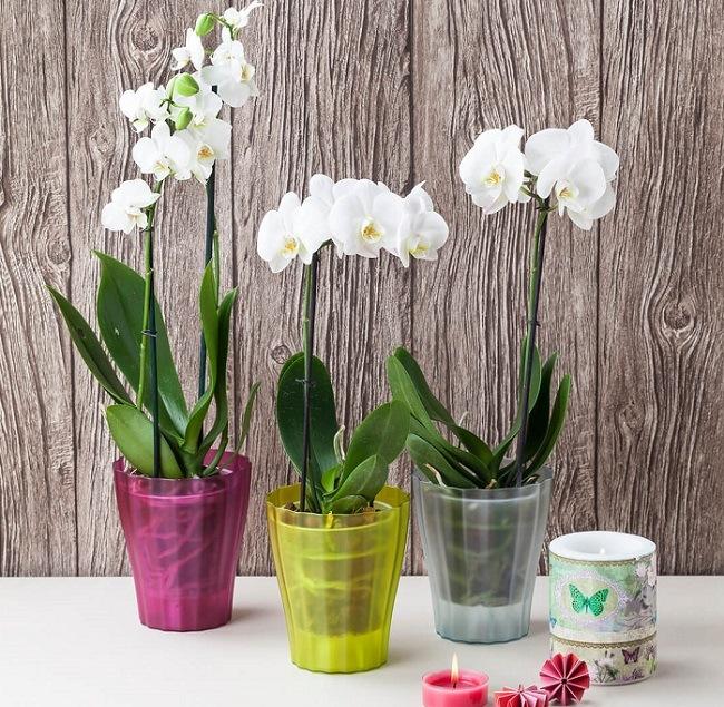 Пластиковый горшок для орхидеи