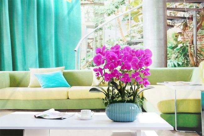 Большое кашпо для орхидеи