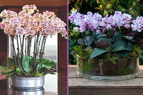 Несколько орхидей