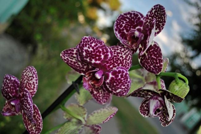 Мелкие цветки