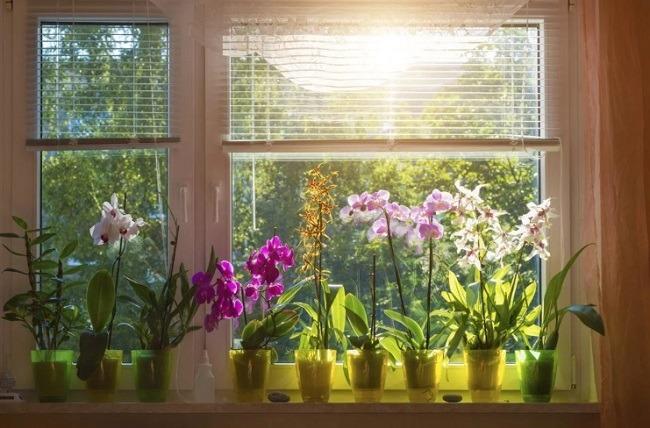 Расположение орхидеи