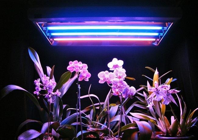 Фитолампа для орхидеи