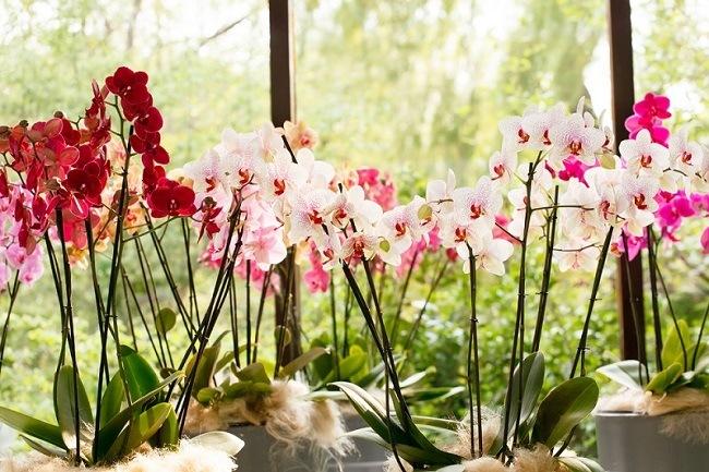 Разные расцветки фаленопсисов