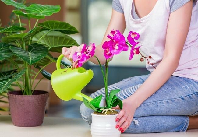 как подкормить орхидею янтарной кислотой