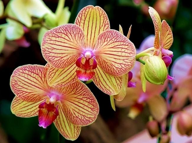 Красивая орхидея