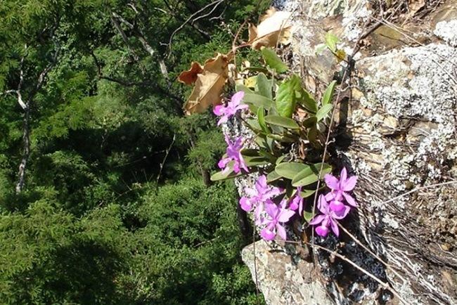 Орхидея на скале