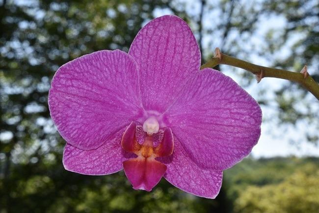 Фото орхидеи в природе