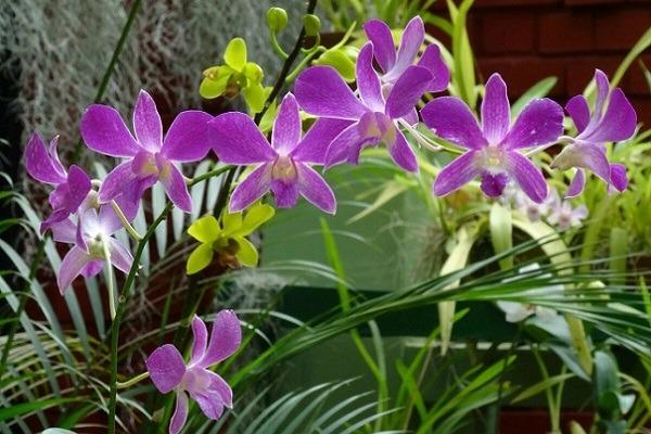 Фиолетовая орхидея в природе