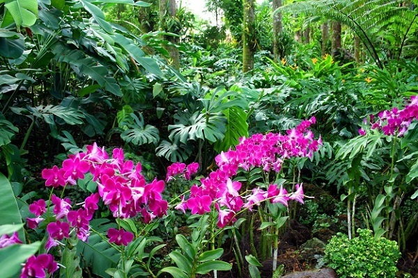 Малиновые орхидеи