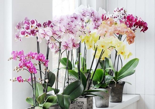 где должна стоять орхидея в квартире