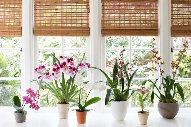 Притенение орхидеи
