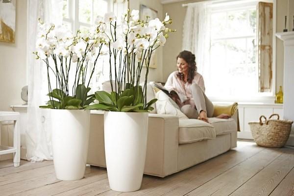 Белые орхидеи в напольных кашпо