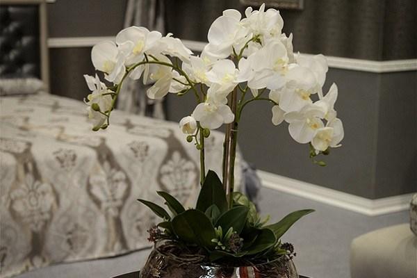 Роскошный белый фаленопсис на тумбе