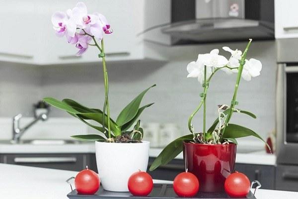 Орхидея должна быть удалена от плиты