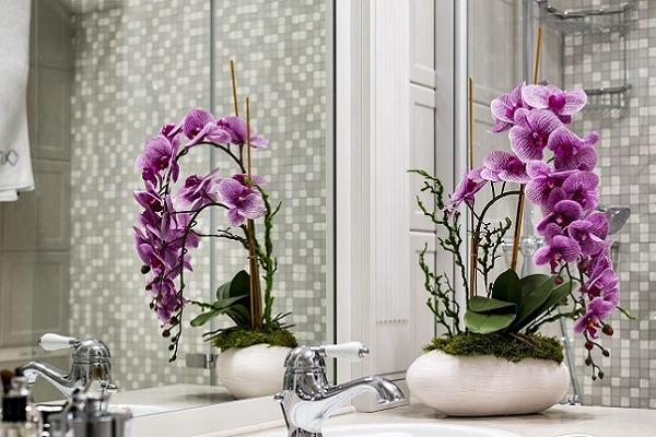 Цветку надо обеспечить хорошую вентиляцию