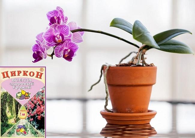 Как применять циркон для орхидей