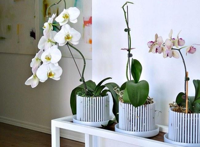 Белые кашпо для орхидей