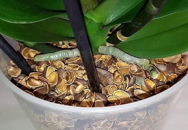 Орхидея в ореховой скорлупе
