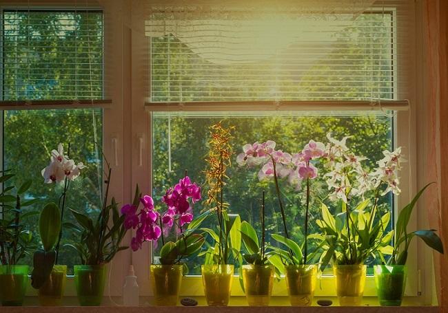 Недостаток света для орхидей