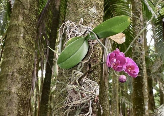 Орхидея в природе на дереве